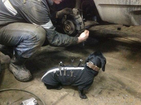 با سگ شاگرد مکانیک آشنا شوید (عکس)