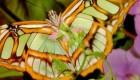عکس های زیباترین پروانه های جهان