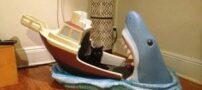 کوسه ای که تخت خواب این کودک است (عکس)