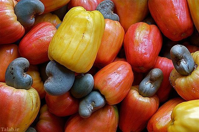 تصاویری از شکل اولیه بادام هندی