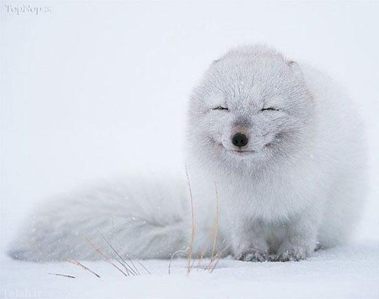 تصاویری از خندیدن حیوانات