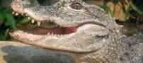 خورده شدن دزد بدشانس توسط تمساح (عکس)