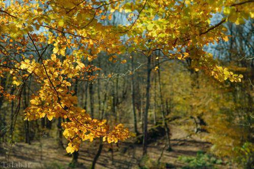 مرداب زیبا و شگفت انگیز هسل + تصاویر