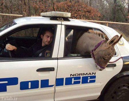 الاغی که توسط پلیس دستگیر شد (عکس)
