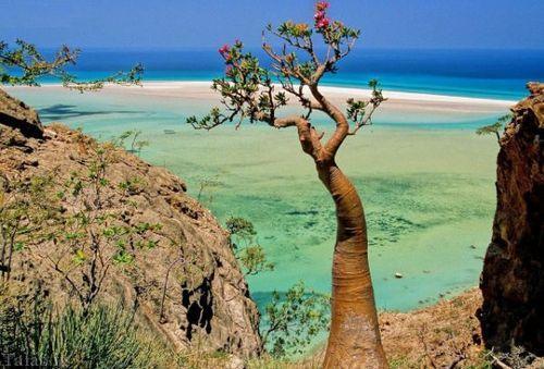 یک جزیره شگفت انگیز و متفاوت در یمن + تصاویر