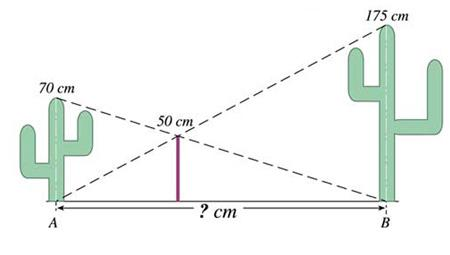معمای جالب فاصله دو کاکتوس