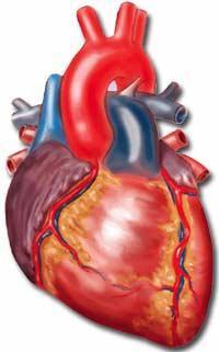 دردهای قلبی را جدی بگیرید