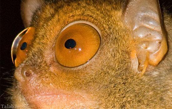 حقایقی در مورد چشم های تیزبین حیوانات + عکس