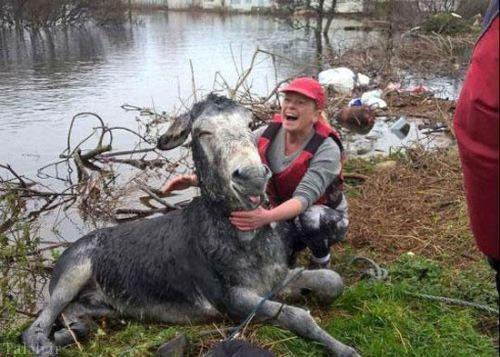 خندیدن خر پس از نجات یافتن (عکس)