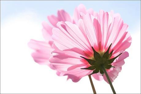 آلبوم گل های مصنوعی طرح بهاری