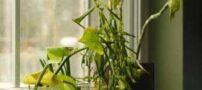نشانه های بیمار بودن و درمان گل و گیاه خانگی