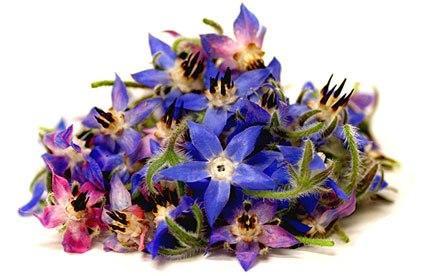 طرز تهیه دمنوش با گل گاوزبان