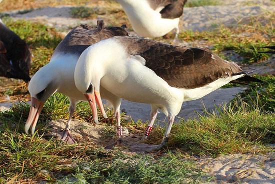 مسن ترین پرنده دنیا با 64 سال سن (عکس)