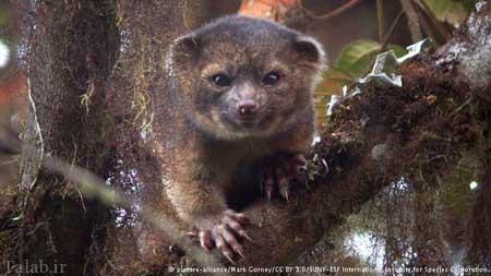مشخصات عجیب ترین حیوانات جهان + عکس