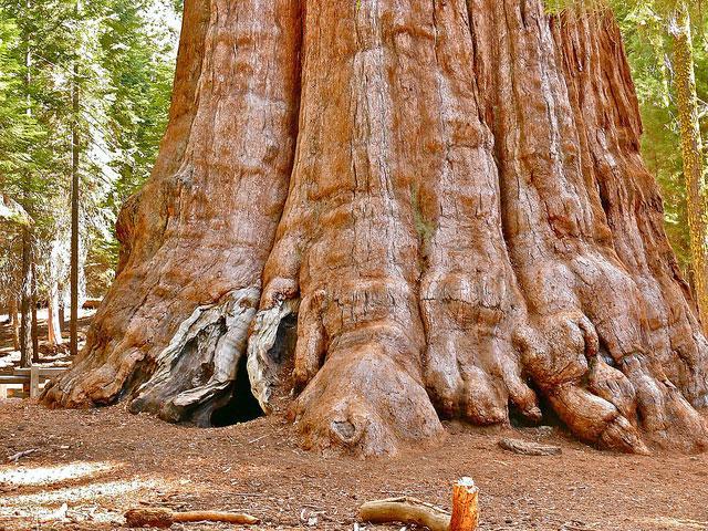 بزرگترین و عریض ترین درخت جهان در هندوستان
