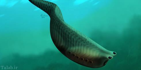 ماهی 505 ساله در آب های کانادا