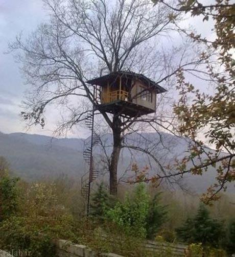 خانه یک خواننده ایرانی بر روی بازوی درخت + عکس