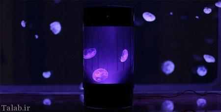 عروس دریایی خاص که مثل چراغ نورانی است (عکس)