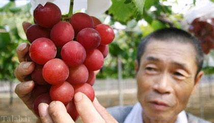 خوشه انگوری که 27 میلیون تومان قیمت دارد (عکس)