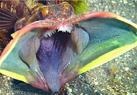 عکس هایی از عجیب ترین موجودات اعماق دریا