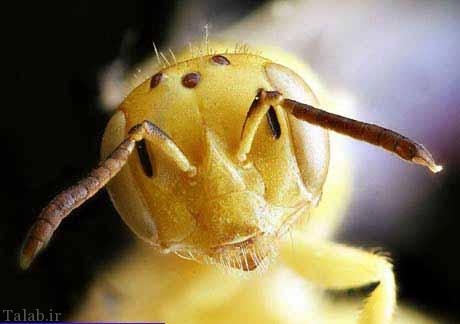 تصاویری از زنبورهای متفاوت در طبیعت
