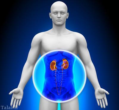 علایم خاص و مهم سرطان کلیه