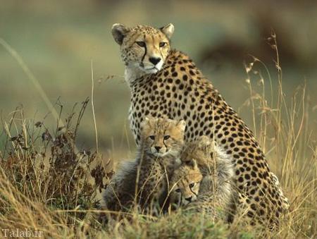 سریع ترین حیوانات جهان + عکس