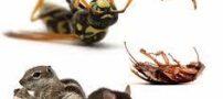 ریشه کن کردن حشرات موذی مثل سوسک