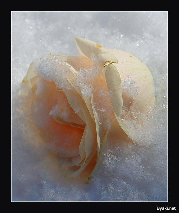 تصاویر رویایی از دنیای گل ها