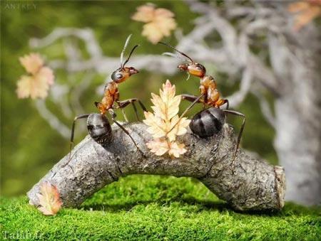 تصاویری دیدنی از زندگی مورچه ها