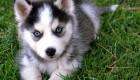 ترسناک ترین سگ دنیا (عکس)