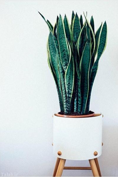 گیاهان جالب تصفیه کننده هوای منزل