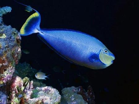 تصاویری شگفت انگیز از اعماق دریا