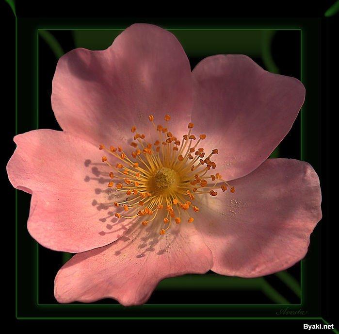 خوردن اب  توسط زن تصاویر رویایی از دنیای گل ها