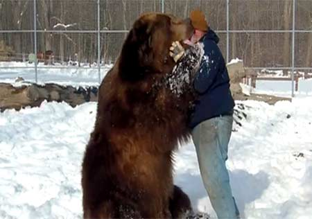 آغوش مرد و خرس که میلیون ها لایک گرفت + عکس