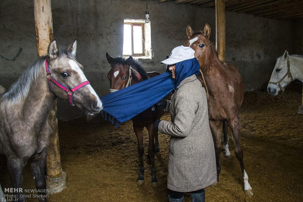 پرورش اسب ترکمن توسط زن بجنوردی (عکس)