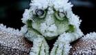 قورباغه ای که در زمستان می میرد و دوباره زنده می شود (عکس)