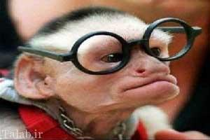 اتوبوس دزدی یک میمون بازیگوش + عکس