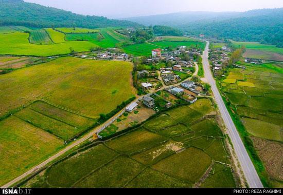 تصاویری از طبیعت هزار جریب نکا در مازندران
