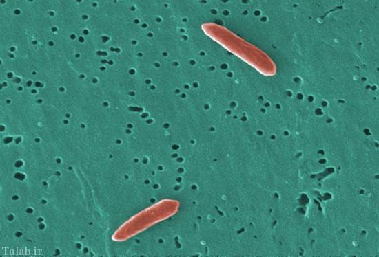 باکتریهای درون بدن انسان را بشناسید !
