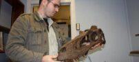 تصاویری از شکارچی دایناسورها