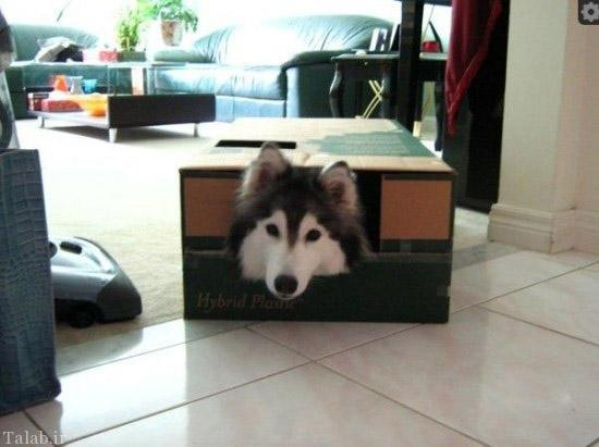 این سگ خلق و خوی گربه ها را دارد + عکس