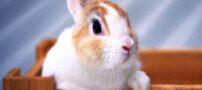 تصاویری از خرگوش های زیبا و ناز