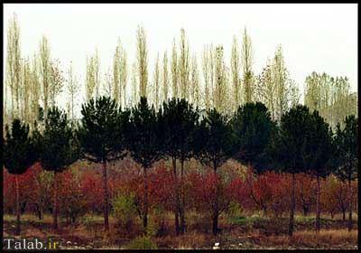 امام زاده های اطراف تهران + عکس