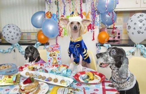 خوش شانس ترین سگ جهان + عکس