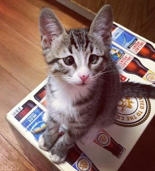 گربه بامزه با چشمانی لوچ