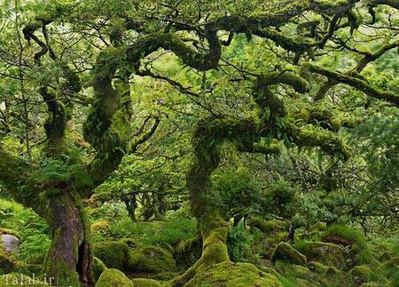تصاویری از جنگل اسرارآمیز ویستمن در انگلیس