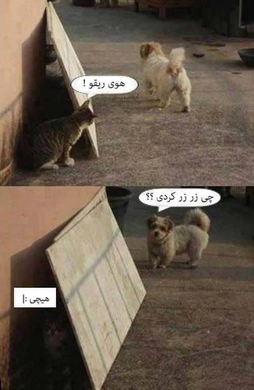 عکس های خنده دار (10)
