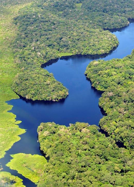 تصاویری دیدنی از جنگل های آمازون