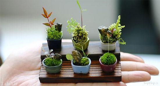 تصاویری از زیباترین گیاهان مینیاتوری ژاپنی